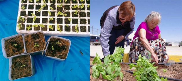 Instalacion de unidades bio intensivas de alimentos organicos